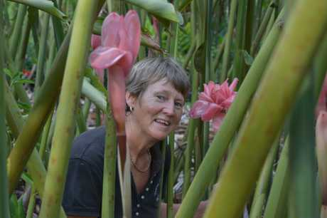 Ginger grower Maureen Simons will supply the festival with 4000 ornamental gingers for display.