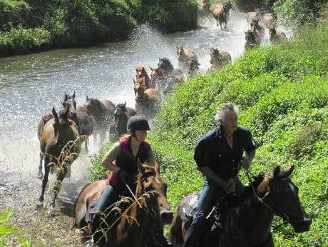 SINGLE FILE: The 37 rodeo broncs follow across a river.