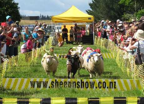 "FLEET FLOCK: The Grand National ""Sheeplechase"" is returning to the Kaikohe A, P & H Show on Saturday."