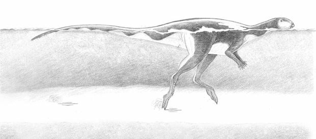 Swimming Lark Quarry dinosaur drawing. Lark Quarry dinosaur tracks in central-west Queensland. 2013.