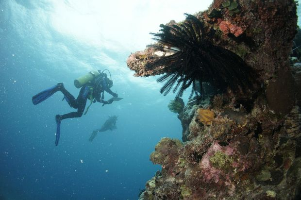 Divers survey the Great Barrier Reef
