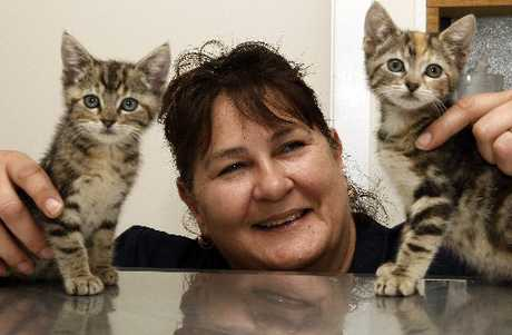 HELP NEEDED: SPCA centre team leader Andrea Honeybun with her two foster kittens