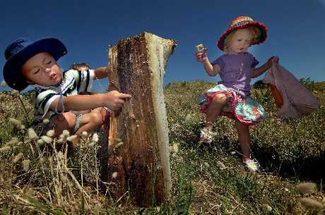 CREEPY CRAWLY HUNT: James Laird, 4, and Mika Wilson, 2, hunt for bugs in the sand dunes.