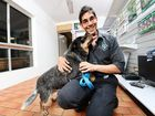 Vet Dr Rishi Shah of Greencross Vets at Redbank Plains with Lara who suffered pancreatitis due to being overweight.