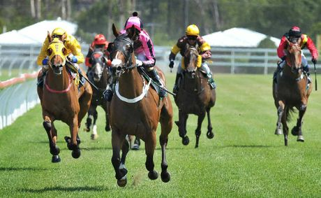 SPOTLIGHT: Silent Actress smashes the field in the Ray White Ipswich Maiden Plate at the Ipswich Race course last Friday afternoon.