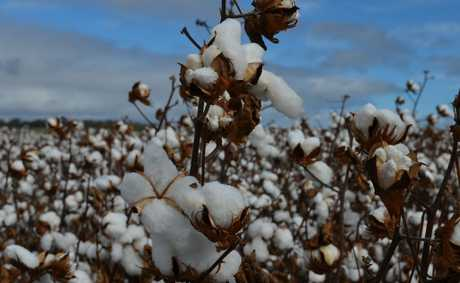 NAMOI Cotton and Louis Dreyfus Commodities Group have plans to establish a joint venture to be called Namoi Cotton Alliance.