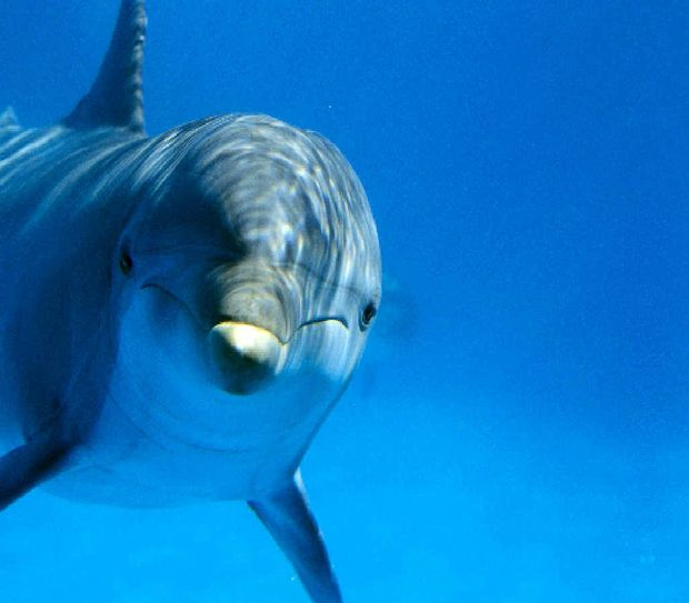 35% of dolphins have disappeared from Curtis Island
