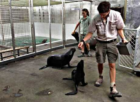 Behind the scenes with the seals and sea lions at Auckland Zoo.