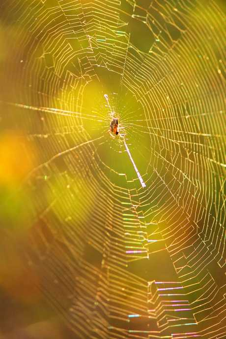 Deebing Heights resident Lisa Roper's shot of a spiderweb has won the inaugural Capture The Cover photographic competition and will feature on the cover of the new Ipswich Yellow Pages Photo.