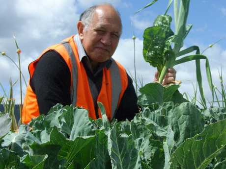 FOOD FRIENDLY: Castlecorp general manager Mike Davies checks the produce in one of Castlecorp&#39;s vegetable gardens.