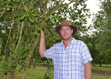 AUSTRALIAN NUT: Macadamia farmer Brad Connelly of McLeans Ridges will be celebrating Australia Day patriotically with the old bush nut on the menu.