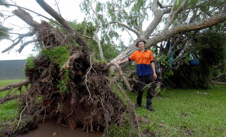 BIG WINDS: Brandon Graham near the tree that was blown over on their property on Homebush Rd.