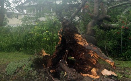 A massive tree on a Gympie Rd, Tinana, footpath collapsed falling toward, but just missing, a home on Saturday.