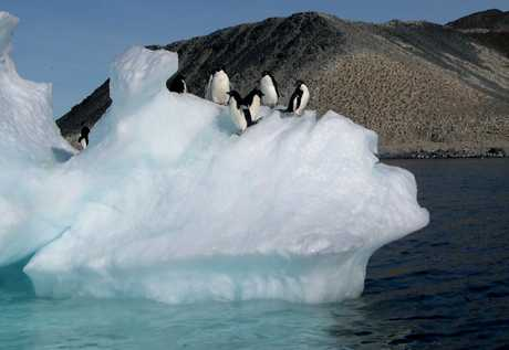 SOUTHERN SEABIRDS: Adelie penguins atop an iceberg in Antarctica. PHOTO/FILE
