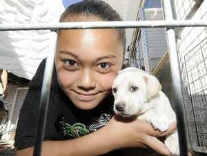 Rebekah Davies (11) holding her puppy rescued by firefighters after being stuk in the fence. 