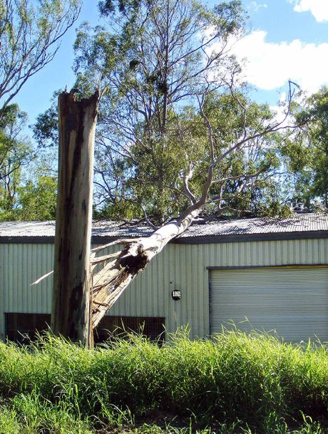 COULD HAVE BEEN WORSE: A large gum tree fell on Lifeline Yamanto during wild weather on Sunday.