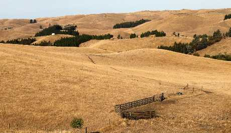 HEATWAVE: Browned-off pasture viewed from Ohiti Rd, Fernhill. PHOTO/ DUNCAN BROWN HBT130547-19