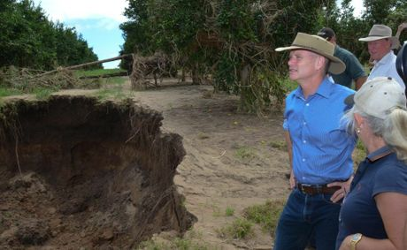 HOLE LOT OF WORK: Campbell Newman surveys the damage to a citrus orchard in Gayndah. Photo Brandon Livesay / Central &amp; North Burnett Times