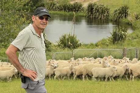 HYBRID VIGOUR: The quality of Simon Beamish's sheep's genetics has been affirmed by a UK study. He is pictured with a mob of Highlander ewes with primera-cross lambs at foot.