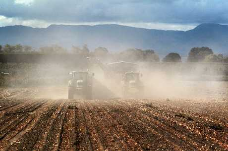 BLUSTERY: A paddock of onions is harvested in Farndon Rd, near Clive, in gusty conditions yesterday.