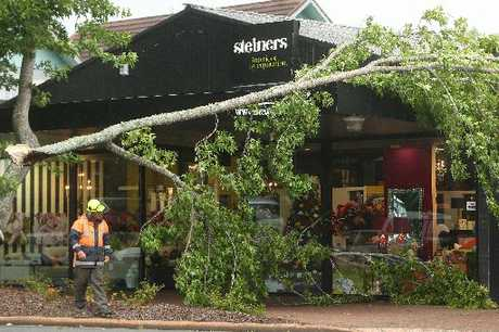 Steiners staff say it was lucky nobody was outside when a tree fell on to the Pukuatua St shop.