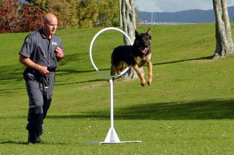 Police dog handler Blair Spalding puts his charge through it's paces.