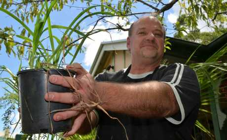 LENDING A HAND: Graham Mitchell is collecting plants, seeds and cuttings to donate to Bundaberg flood victims. Photo: Louise Cheer / South Burnett Times