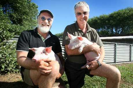 LITTLE PIGS: Brothers Ross, left, and Grant Skilton hold a couple of month-old piglets.