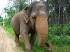 Siam, the oldest elephant in Australia, had died at Australia Zoo.