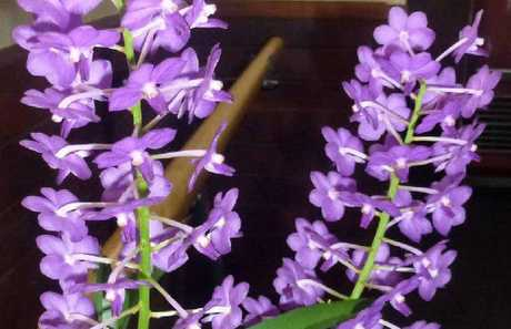 WINNING ORCHIDS: Some of the beautiful examples of members orchids at the first Woodburn Orchid Society meeting for the year.