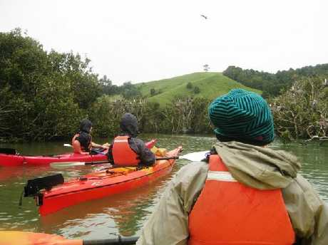 UP CLOSE: Experiencing Marine Reserve (EMR) kayakers navigate their way through mangroves at Waikaraka Marine Reserve.
