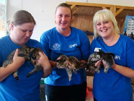 RESCUED: Volunteers Nikita Quine and Amanda Bugden and shelter manager Maree Corder with the 4-week-old kittens.