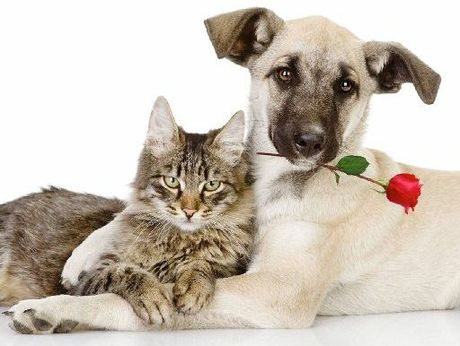 """Rotorua SPCA's find your purrrfect match this Valentine's Day"" promotion sees cats and dogs being offered half-price. Photo / Supplied"