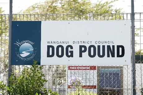 DOG SAFETY: The Wanganui Dog Pound has been kept full with an overflow from Rangitikei, but officers were unable to save a bitch and her puppies that were dumped on the side of the road.PHOTO/RAE CLIFFE