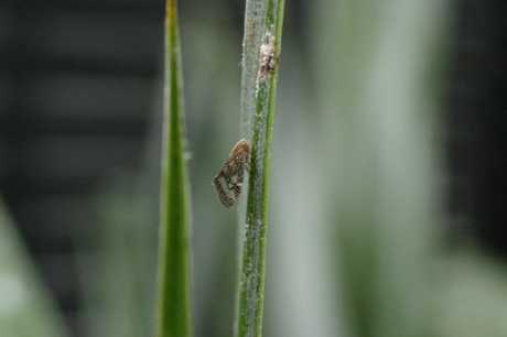 Aphids can be controlled if you manage your chives correctly. 