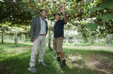 Nathan Guy (left) with Jeff Roderick, a Te Puke kiwifruit grower who is hoping his orchard is past the worst of Psa.