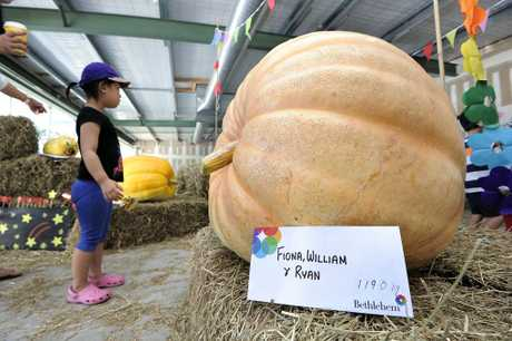 The biggest pumpkin weighed in at 119kg at the Bethlehem Town Centre competition.