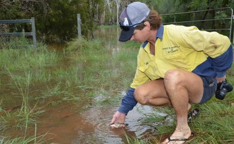 After taking photos of the Wooroolin swamp's first overflow, Barney Horne releases a fish back that was washed up onto the road.