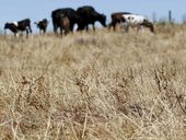 Drought conditions cost Bay of Plenty dairy farmers $20 million in lost milk production last month and could threaten the kiwifruit harvest as new figures reveal the region had one of its driest summers since records began in 1898.