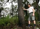 THOUSANDS of hectares of bushland in Central Queensland could be at risk if tree clearing laws are wound back, conservationists say.