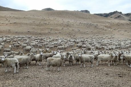 Hawke's Bay is officially in a drought, a government announcement has confirmed. PHOTO/FILE