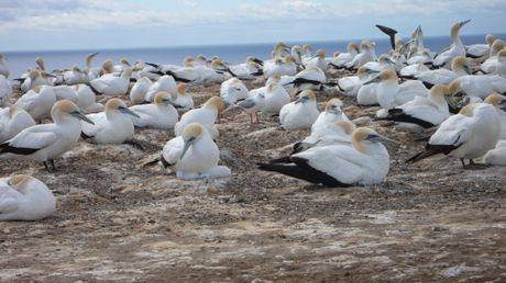 The gannet colony at Cape Kidnappers is a popular spot and the views from above are superb. Right, art deco is the signature of Napier.