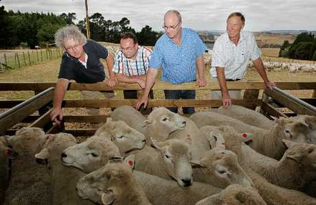 Wool buyers from Australia and the UK inspect fleeces at Glenross Station in Hawke&#39;s Bay. 