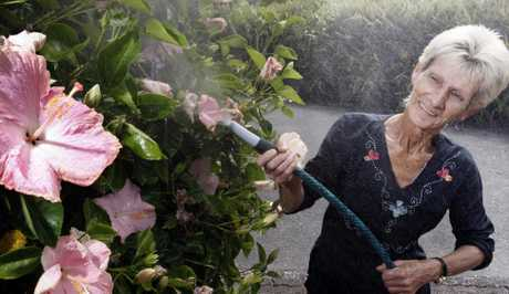 Whangarei resident Helga Renouf watering her hibiscus in the absence of water restrictions in the district.