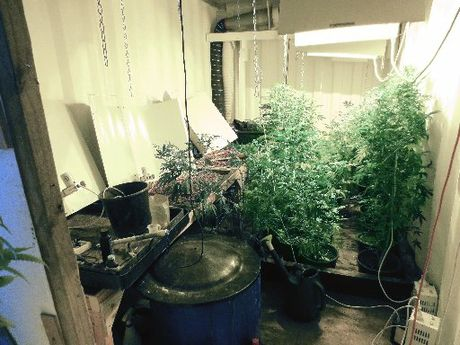 A sophisticated cannabis growing operation was set up in a shipping container buried beneath the deck of a Waimamaku home.