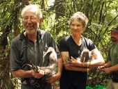 A special event for the Maungatautari Ecological Island Trust took place recently when two pair of Kiwi were transferred to enjoy a freer lifestyle.