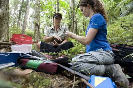 CONSERVATION GOAL: Zookeeper Michelle Whybrow and DoC ranger Emma Craig check on a kiwi before release on to a DoC estate at Rewarewa.