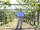 Gold G3 kiwifruit could be bankrolled into orchards around the region if growers take up a proposal to convert their green crops.