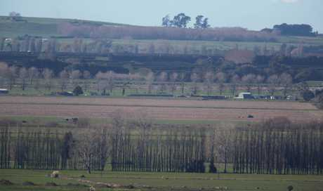 Te Puke Rural scene.