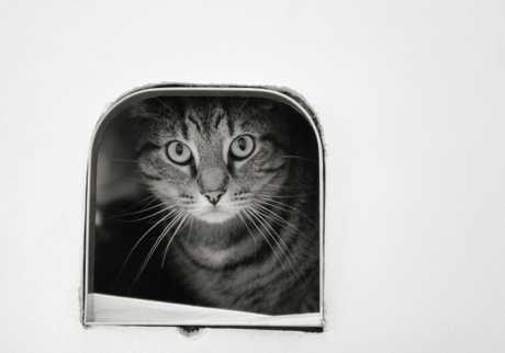 Magnet-operated cat doors can keep neighbour cats out of your house.